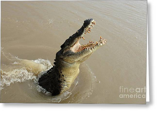 Salt Water Crocodile 2 Greeting Card by Bob Christopher