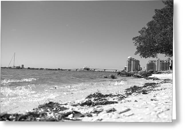 Sarasota Bayfront Greeting Card by Betsy Knapp