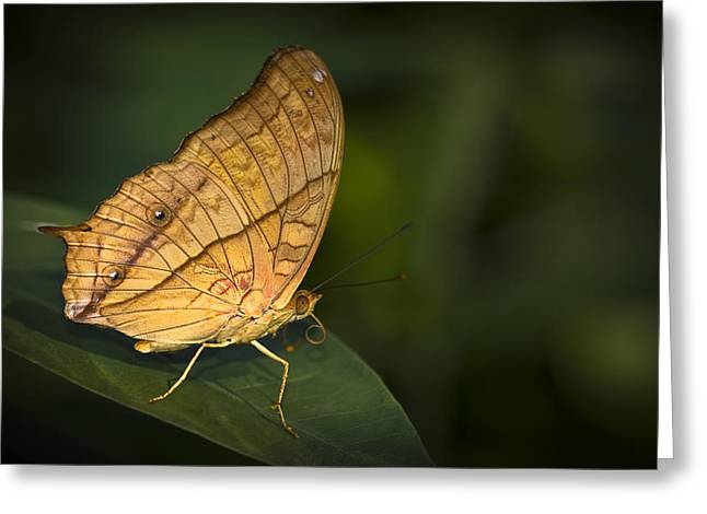 Saturn Butterfly Greeting Card