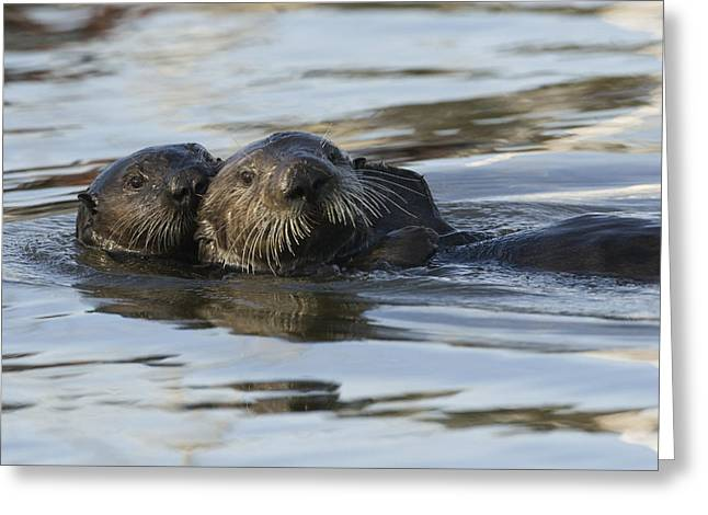 Sea Otter Mother And Pup Elkhorn Slough Greeting Card