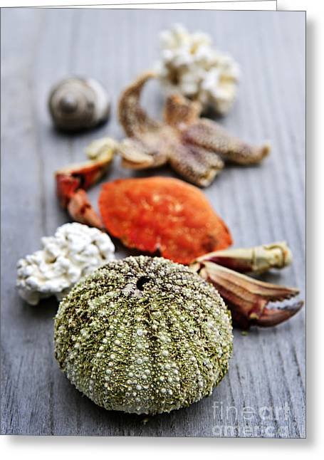 Sea Treasures Greeting Card by Elena Elisseeva