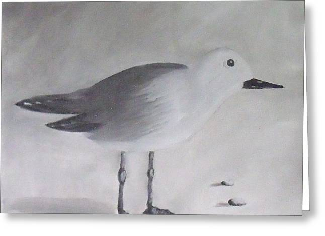 Seagull Greeting Card by Debra Piro
