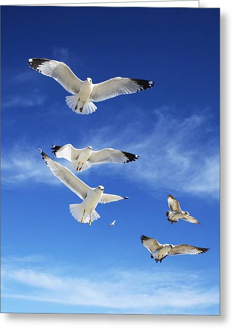 Seagulls Ascending Greeting Card