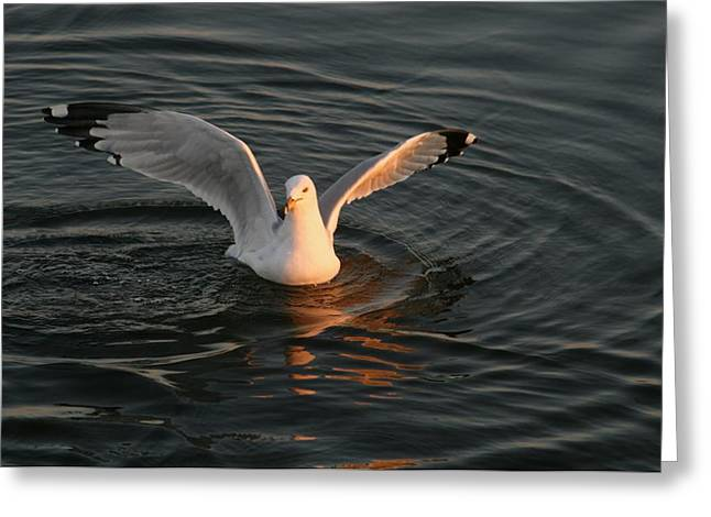 Seagulls At Sunset Greeting Card by Valia Bradshaw