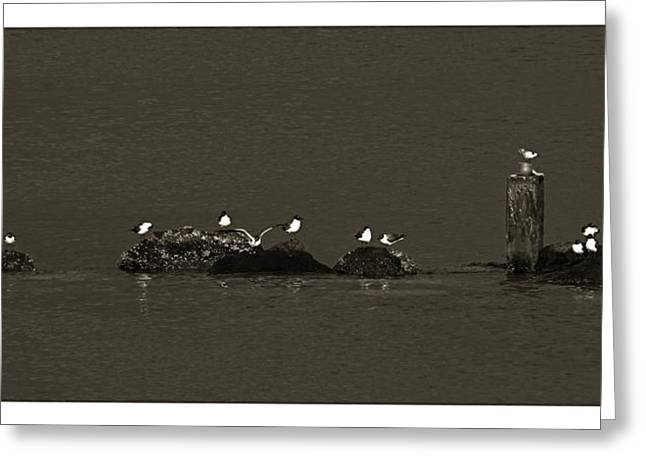 Greeting Card featuring the photograph Seagulls On Rocks- St Lucia by Chester Williams