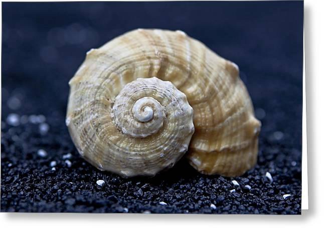 Seashell On Black Sand Greeting Card by Joana Kruse