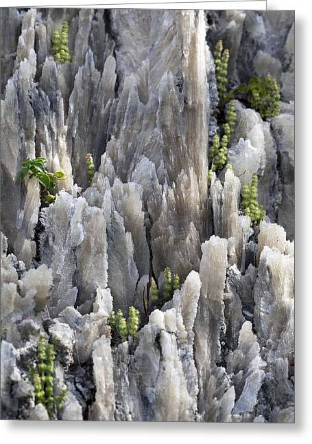 Selenite Swallow-tail Crystals Greeting Card by Dirk Wiersma