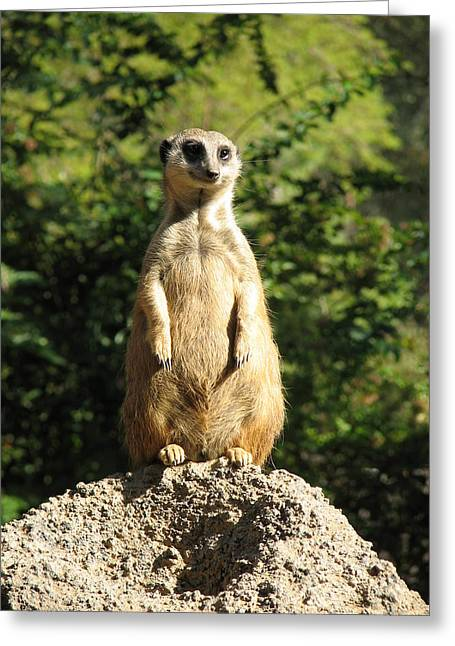 Greeting Card featuring the photograph Sentinel Meerkat by Carla Parris