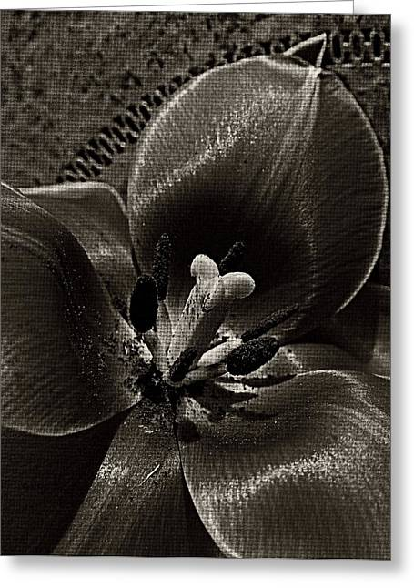 Shades Of Gray Greeting Card by Chris Berry
