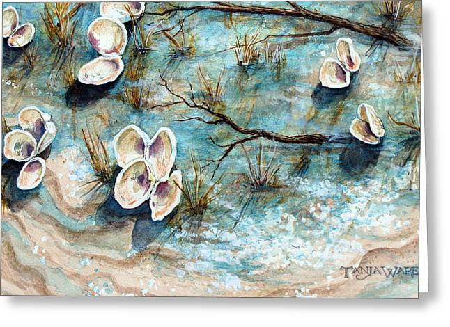Shell Shadows Greeting Card by Tanja Ware