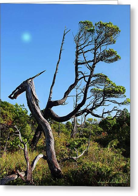 Shorepine Bog Greeting Card by Dayvid Clarkson