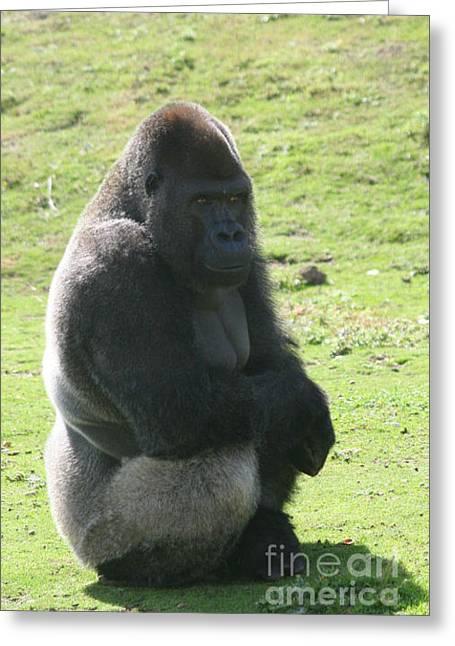 Sitting Gorilla Greeting Card by Carol Wright