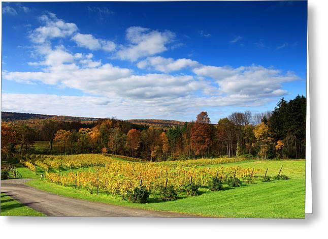Six Miles Creek Vineyard Greeting Card by Paul Ge