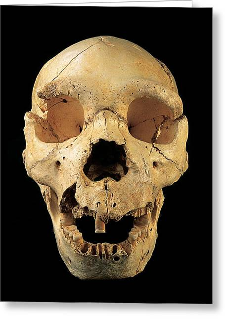 Skull 5, Sima De Los Huesos Greeting Card