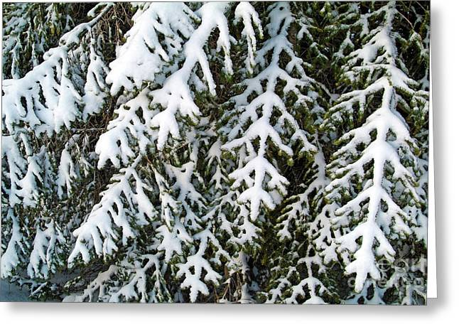 Snowy Fir Tree Greeting Card by Sami Sarkis