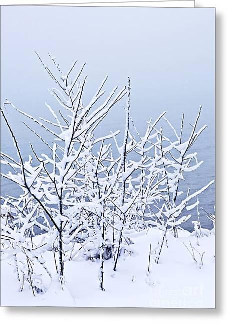 Snowy Trees Greeting Card by Elena Elisseeva