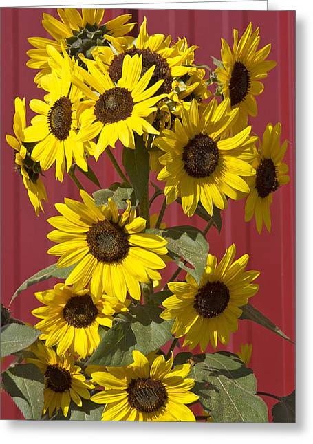 So Many Sunflowers Greeting Card