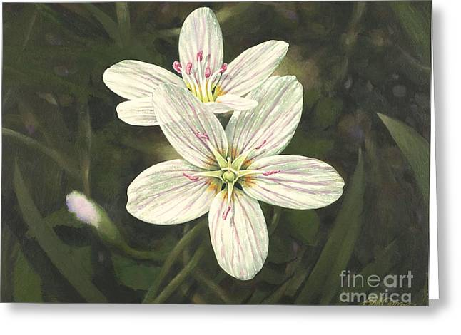 Greeting Card featuring the painting Spring Beauty by Bob  George