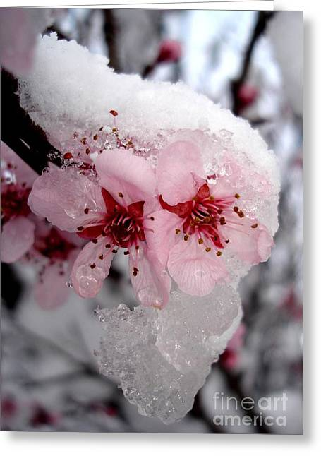 Spring Blossom Icicle Greeting Card