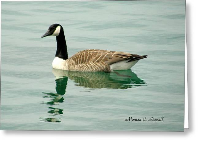 Spring Collection - Goose In Bay Harbor Greeting Card