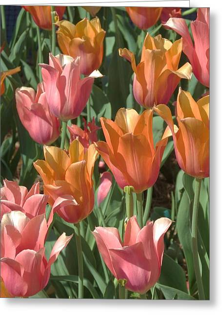 Spring Tulips  Greeting Card by Rebecca Overton