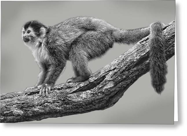 Squirrel Monkey Greeting Card by Larry Linton