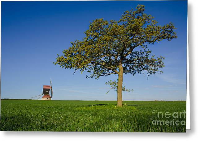 Stevington Windmill Greeting Card by Radoslav Toth