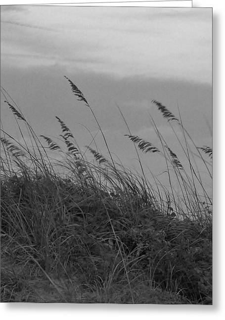 Summer Fairwell Greeting Card by Stacy Sikes