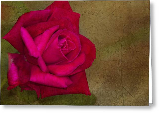 Summer's End Greeting Card by Anne Rodkin