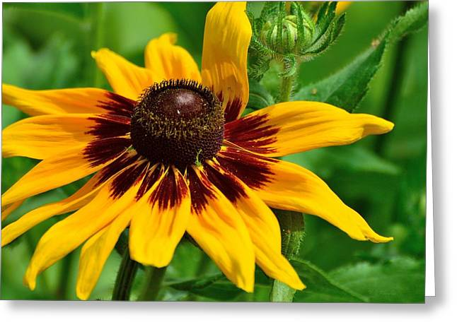Greeting Card featuring the photograph Sunflower by Kathy King