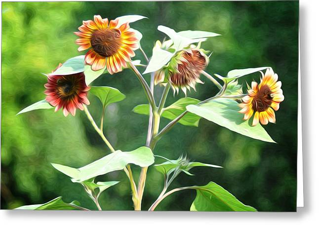 Sunflower Power Greeting Card by Bill Cannon