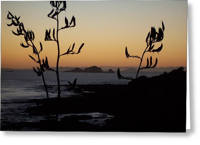 Sunrise On East Coast Of North Island 1 Greeting Card by Peter Mooyman
