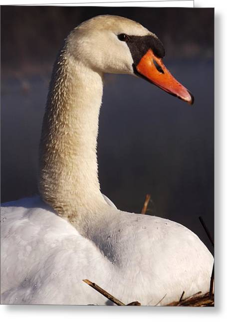 Greeting Card featuring the photograph Swan Lake 1 by Gerald Strine