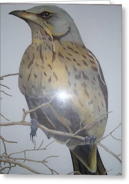 Swedish Bird Greeting Card by Per-erik Sjogren