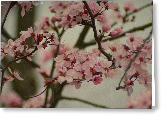 Sweet Spring Greeting Card by Terrie Taylor