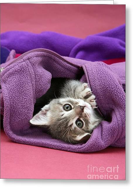 Tabby Kitten Greeting Card by Jane Burton