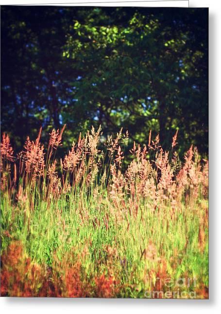 Tall Grass Greeting Card by Silvia Ganora