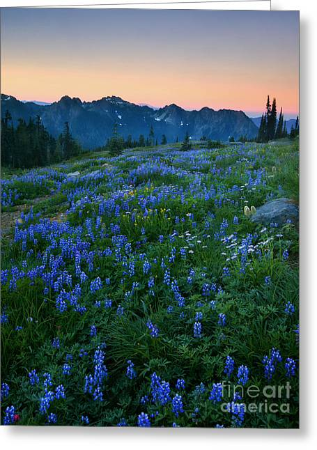Tatoosh Sunrise Greeting Card by Mike  Dawson