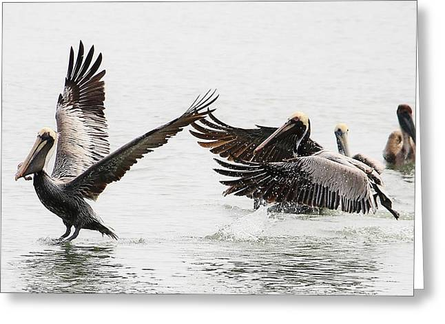 The Chase Greeting Card by Paulette Thomas