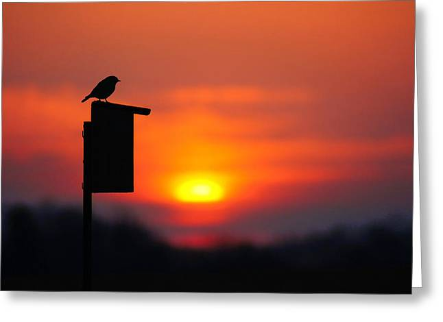 The Early Bird Greeting Card