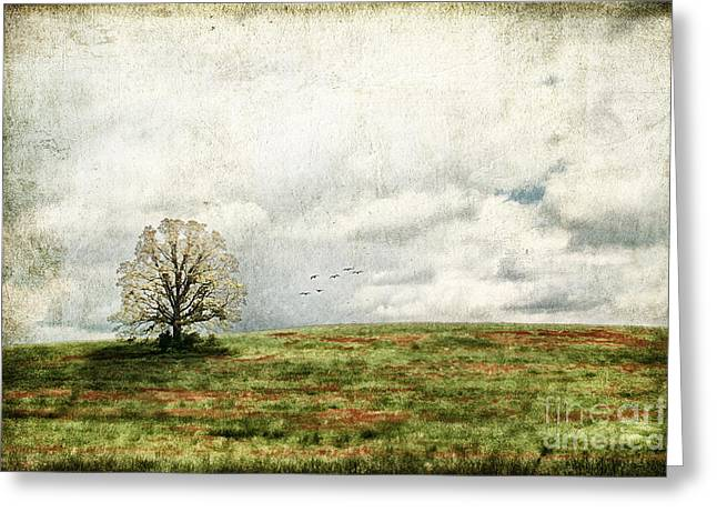 The Lone Tree Greeting Card by Darren Fisher