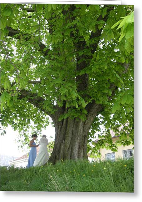 Greeting Card featuring the photograph The Tree by Bonnie Goedecke