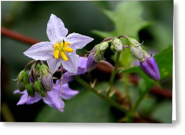 Thistle Flowers Greeting Card by Paula Tohline Calhoun