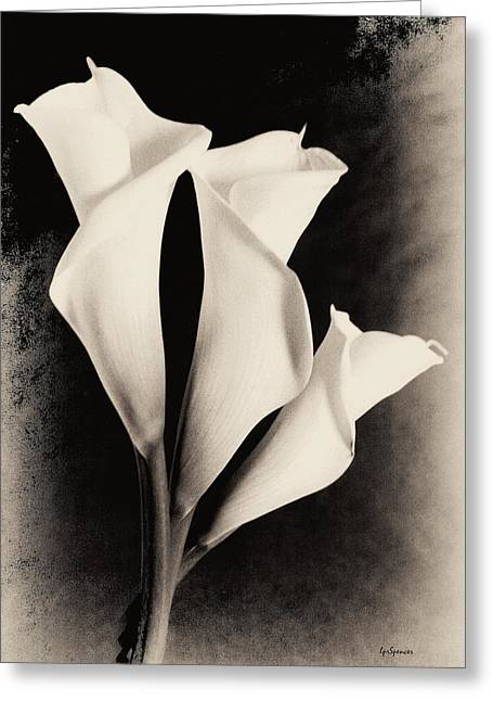 Three Calla Lilies Greeting Card by Lisa  Spencer