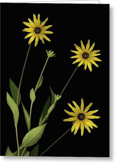 Three Yellow Flowers Greeting Card by Deddeda