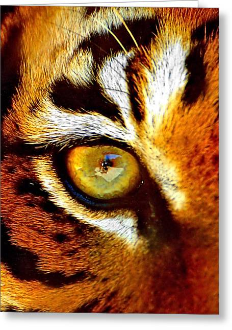 Tigers Eye Greeting Card