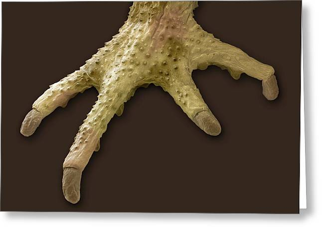 Toad Foot, Sem Greeting Card