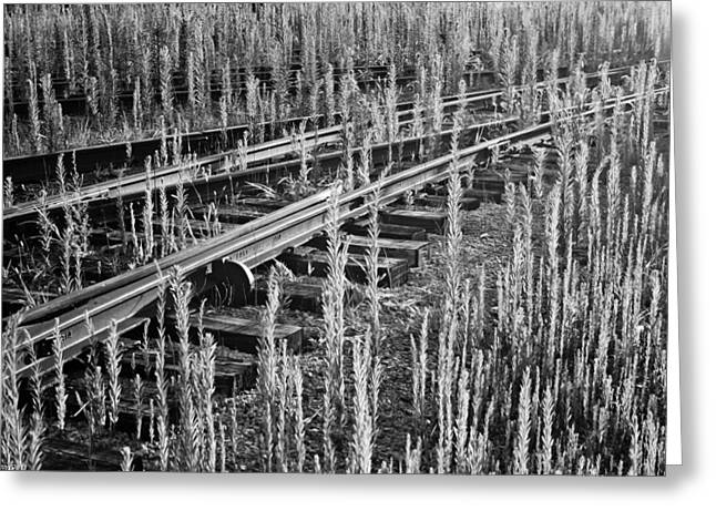 Tracks Greeting Card by Michael Nowotny