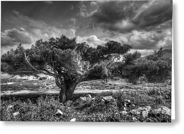 Tree In The Wind Greeting Card by Stavros Argyropoulos