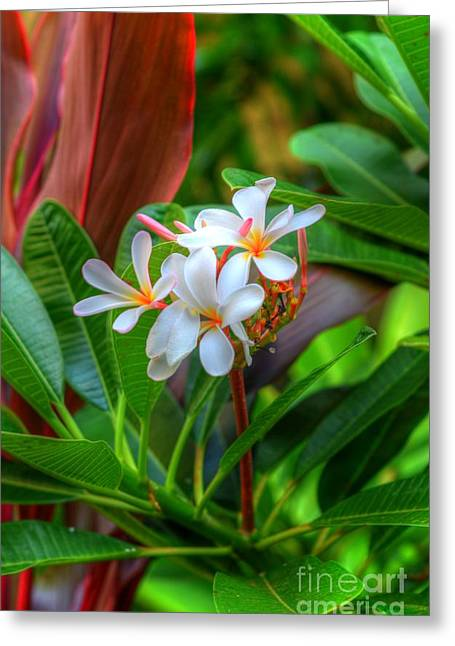 Tropical  Greeting Card by Kelly Wade